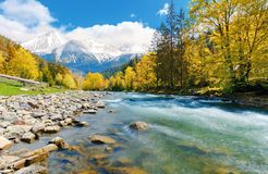 Gorgeous day near the forest river in mountains. Deciduous tree with vivid yellow foliage among spruce on the curve rocky shore. dreamy composite autumn stock photography