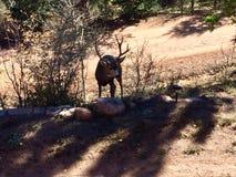 Gorgeous deer buck stock photos