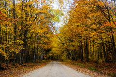 Fall road in forest of Pictured Rocks National Lakeshore Munisin. Gorgeous display of fall colors, leaves, red, orange, green and yellow trees coverd empty road Stock Photography