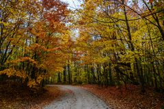 Fall road in forest of Pictured Rocks National Lakeshore Munisin. Gorgeous display of fall colors, leaves, red, orange, green and yellow trees coverd empty road Stock Photo