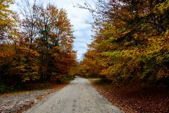 Fall road in forest of Pictured Rocks National Lakeshore Munisin. Gorgeous display of fall colors, leaves, red, orange, green and yellow trees coverd empty road Royalty Free Stock Photo