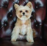 Gorgeous Dog Stock Image