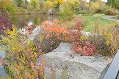 Fall Foliage Boise Idaho Albertson Park Stock Photo
