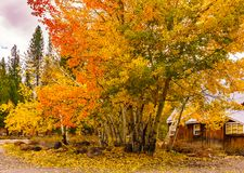 Fall Colors in Truckee, California stock photography