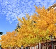 Gorgeous Fall day in the Desert. Royalty Free Stock Image