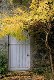 Gorgeous Fall leaves on bent branches in front of door Royalty Free Stock Photos