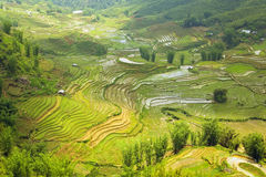 Gorgeous farm fields, rice paddy terraces, Sapa, Vietnam Stock Photography