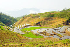 Gorgeous farm fields, rice paddy terraces, Sapa, Vietnam Royalty Free Stock Photos