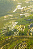 Gorgeous farm fields, rice paddy terraces, Sapa, Vietnam Royalty Free Stock Photography