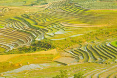 Gorgeous farm fields, rice paddy terraces, Sapa, Vietnam Stock Images