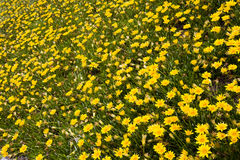 Gorgeous field of flowers Stock Photography