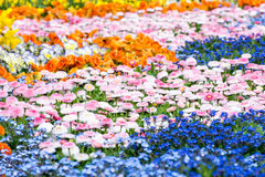 Gorgeous Flower Bed Stock Photography