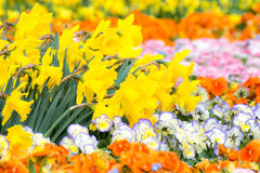 Gorgeous Flower Bed royalty free stock images