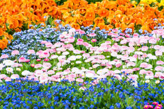 Gorgeous Flower Bed Royalty Free Stock Photography