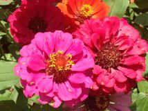Gorgeous Flowers Royalty Free Stock Images
