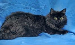 Gorgeous fluffy black cat Stock Photos