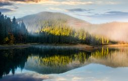 Gorgeous foggy sunrise on the lake in forest Stock Images