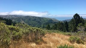 Gorgeous forest and ocean in Marin County. Trees and Pacific Ocean along a hiking trail near Muir Woods in Marin County, California Royalty Free Stock Photos