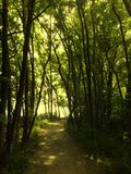 Gorgeous forrest leading to ocean Royalty Free Stock Image