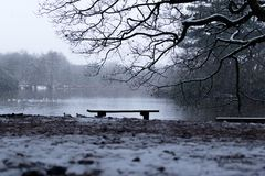 Freezing Framed Winter Bench. A gorgeous framed view looking out with snow falling complete with ducks Royalty Free Stock Image