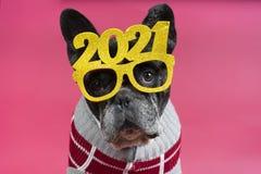 Free Gorgeous French Bulldog Dog With Festive Glasses 2021. Happy New Year Stock Photo - 201613900