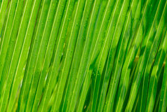 Gorgeous, fresh beautiful closeup view of palm leafs with water droplets after rain background Stock Photo
