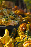 Gorgeous Gourds 3 Stock Images