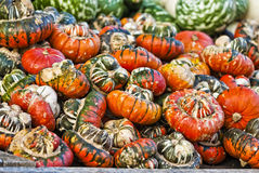Gorgeous Gourds. Pumpkins, like other squash, are native to North America. Pumpkins are widely grown for commercial use, and are used both in food and recreation Stock Images