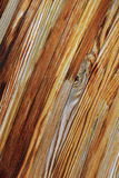 Gorgeous grain of wood background Stock Image