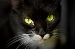 Gorgeous green cat eyes. Mysterious, green cat eyes Royalty Free Stock Image