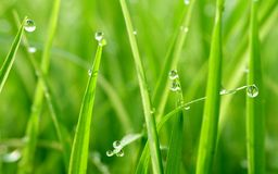 Gorgeous green grass with water drops. In the morning, photographed at close range Stock Photos