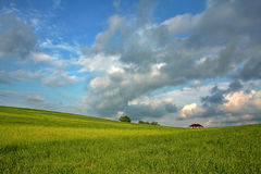 Gorgeous green meadow. Stock Photography