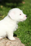 Gorgeous jack russell terrier puppy on some stone Royalty Free Stock Images