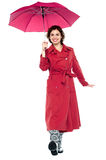 Gorgeous lady with umbrella walking towards you Stock Photos