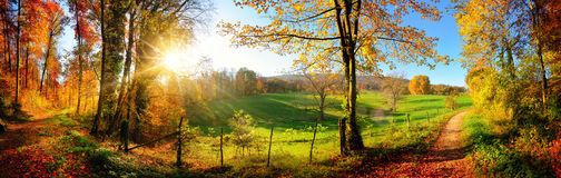 Gorgeous landscape panorama in autumn. Gorgeous landscape panorama showing a meadow and a path leading into a forest, with autumn colors and blue sky Stock Image