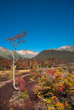 Gorgeous landscape of Patagonia`s Tierra del Fuego National Park Royalty Free Stock Images