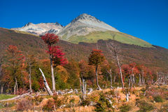 Gorgeous landscape of Patagonia`s Tierra del Fuego National Park. In Autumn, Argentina stock photo