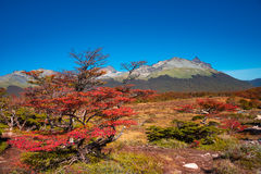 Gorgeous landscape of Patagonia`s Tierra del Fuego National Park Royalty Free Stock Image