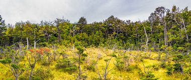 Gorgeous landscape of Patagonia`s Tierra del Fuego National Park Stock Image
