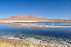 Gorgeous landscapes of Sur Lipez, South Bolivia Stock Image