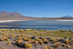 Gorgeous landscapes of Sur Lipez, South Bolivia Royalty Free Stock Images