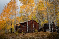 Gorgeous log cabin amongst beautiful colored autumn leaves in Utah royalty free stock images
