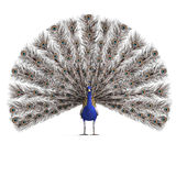 Gorgeous male peacock. 3D rendering with clipping Royalty Free Stock Photo