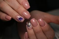 Gorgeous manicure, dark purple tender color nail polish, closeup photo royalty free stock photo