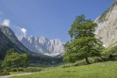 At the big maple ground in the Eng. Gorgeous maple tree in summer with the peaks of the Karwendel mountains stock photos
