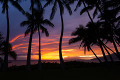 Gorgeous Maui sunset in Kihei. Gorgeous Maui sunset between the palm trees royalty free stock photography