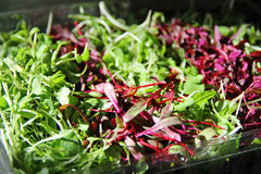 Gorgeous Microgreens Stock Images