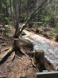 Beautiful Colorado Creek royalty free stock image