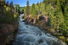 Gorgeous Mountain Stream in Keystone Gorge Outside Telluride, Colorado Royalty Free Stock Photo