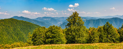 Gorgeous mountainous panorama with forest Stock Images